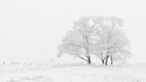 ロシアの四季‐美しくない春、短い夏と長く暗い冬、黄金の秋